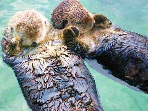 Do you remember? For the year and a half we lived with an ocean between us, we send this image back and forth to each other. Sea otters hold hands when they sleep so they never drift apart.
