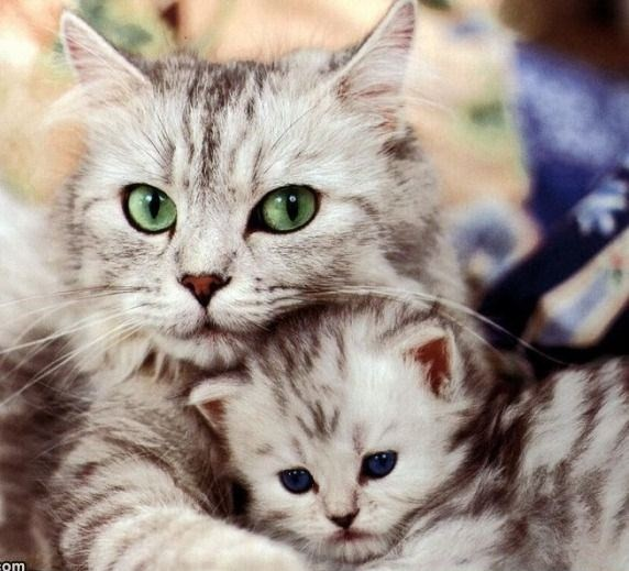 Mother_And_Kitten