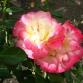 Napa in Bloom
