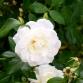 Floral Napa