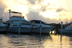 Magic Tarpon28