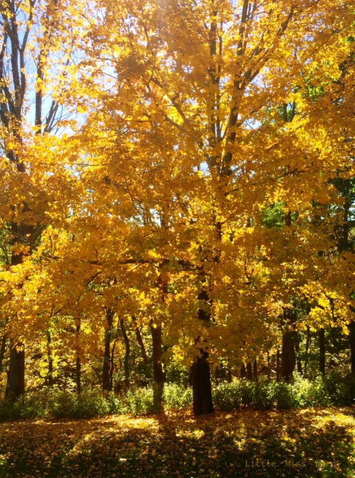 Fall Tree, Autumn, Yellow Leaves